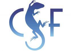 CSF Original Blue Gradient